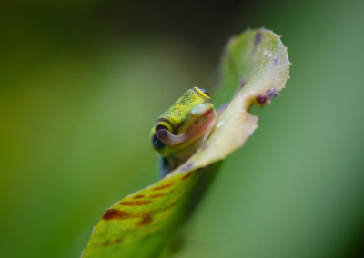gecko_0953