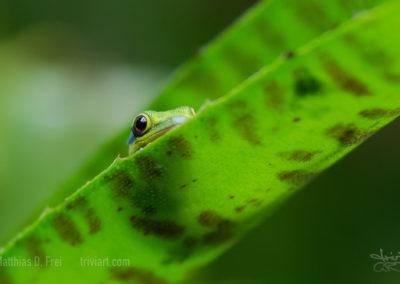 gecko_0999