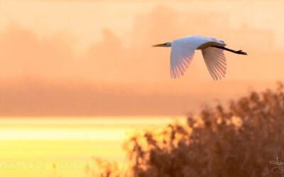 Wasservögel am Klingnauer Stausee