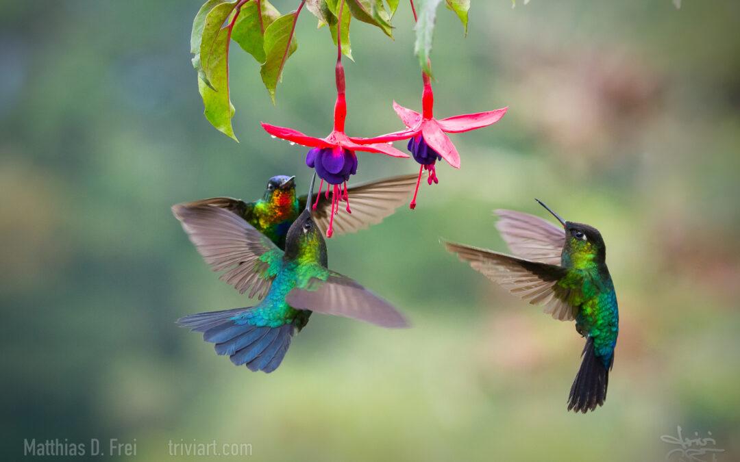 Costa Rica – Erinnerungen