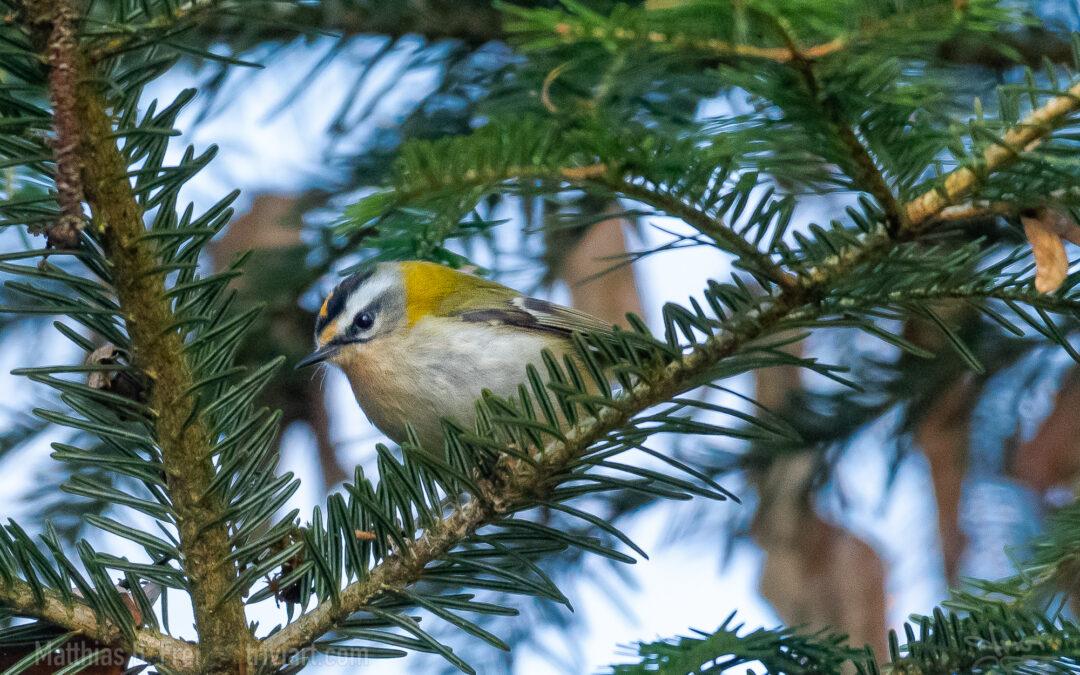 Vögel in der Umgebung