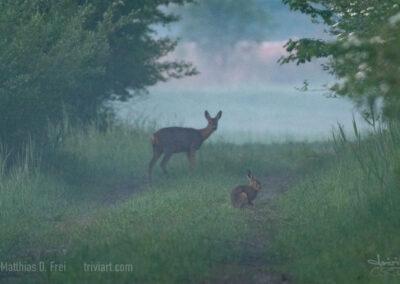 Wo Reh und Hase sich Guten Morgen sagen