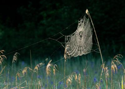 Spinnennetz in den ersten Strahlen der Morgensonne