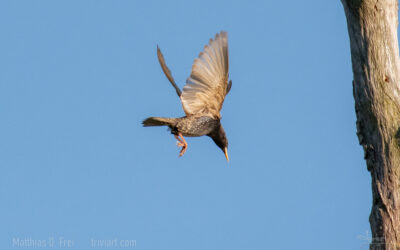 Vogelquiz mit einheimischen Vögeln