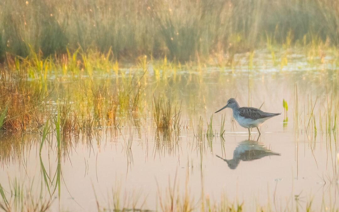 Wunderwelt der Vögel