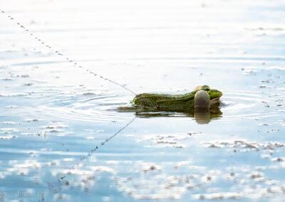 Ein Frosch als Wasserpistole... ;-)